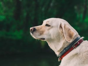 TAG Level - Manage Tick Bites for Dogs